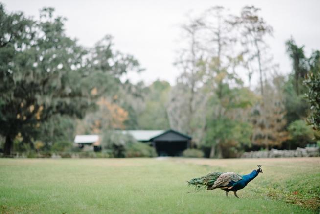 Charleston Weddings_3584.jpg