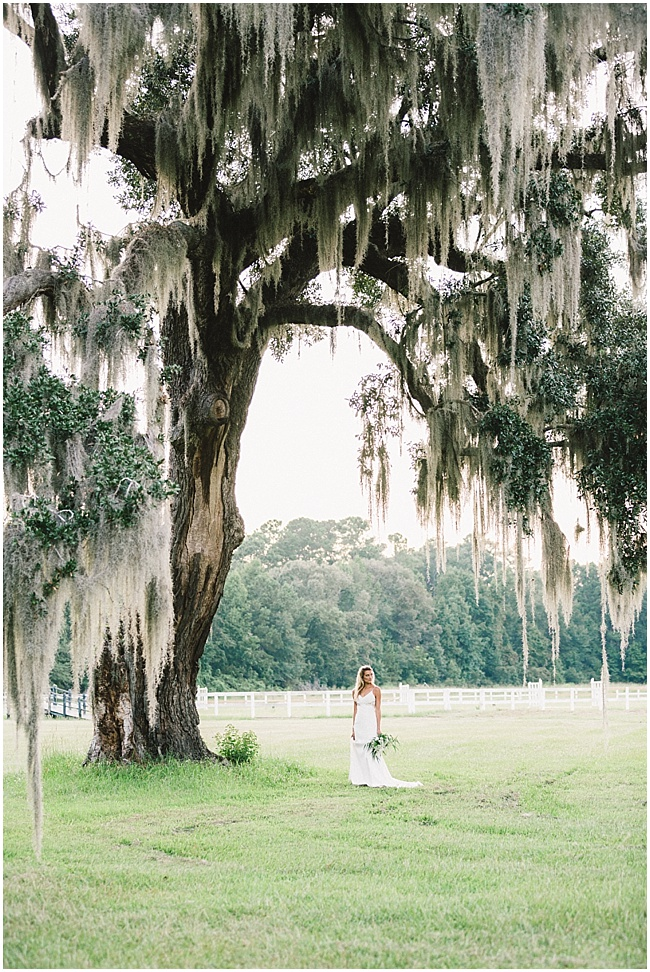 3e8 photography,avenue of oaks,beaufort,bridal,bride,charleston,dress,farm,film,gown,horse,husa plantation,modern trousseau,oak,portraits,south carolina,southern,spanish moss,wedding,wedding photography,